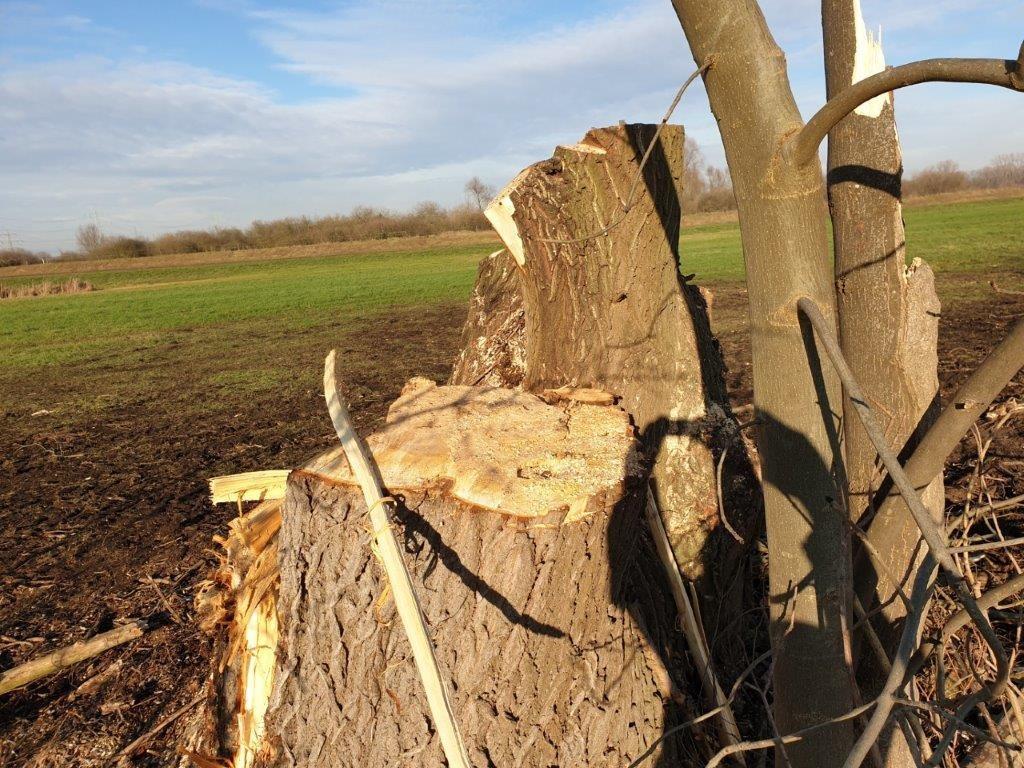 Anfrage: Baumfällungen in der westlichen Bickenbacher Gemarkung